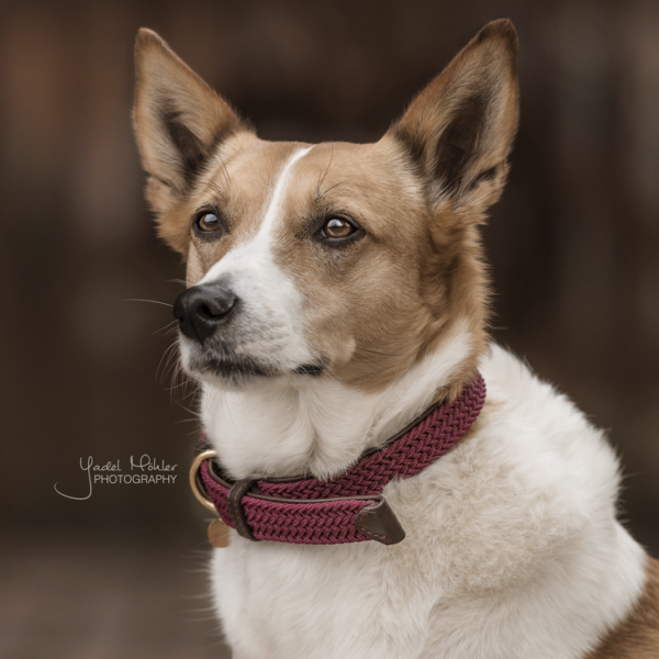 kentucky-plaited-nylon-dog-collar