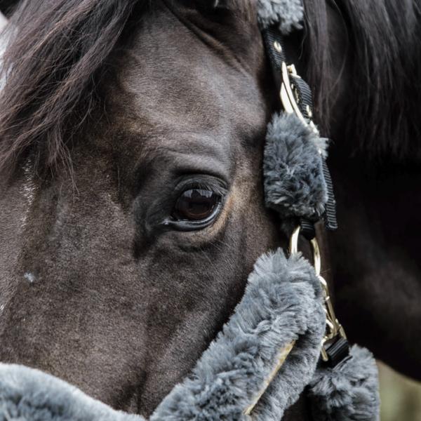 kentucky-horsewear-sheepskin-shipping-halter-grey