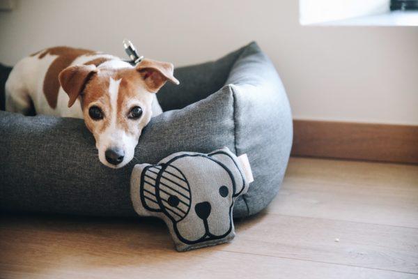 kentucky-dogwear