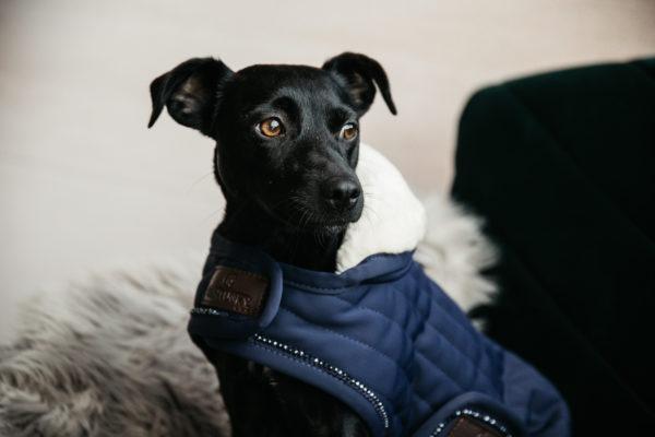 kentucky-koves-kutyaruha