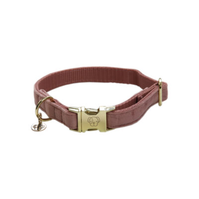 kentucky-dog-collar-velvet