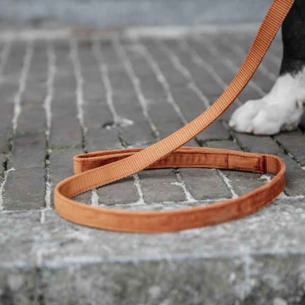 kentucky-dog-lead-velvet-120