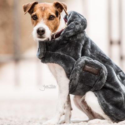 kentucky-szormes-kutyaruha