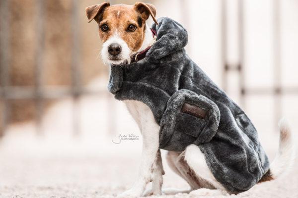kentucky-dog-coat-fake-fur