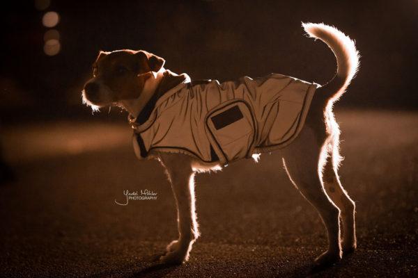 kentucky-reflective-kutyaruha