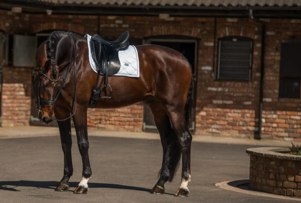 equestrian-stockholm-white-perfection-drezurna-podsedlova-decka