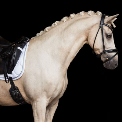 equestrian-stockholm-white-perfection-dijlovas-nyeregalatet-cob