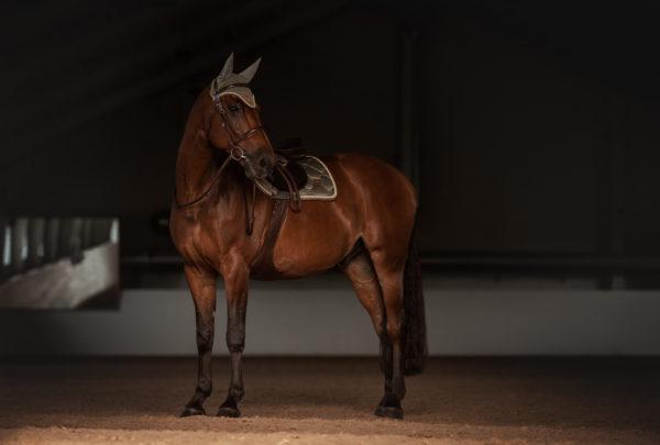 equestrian-stockholm-golden-olive