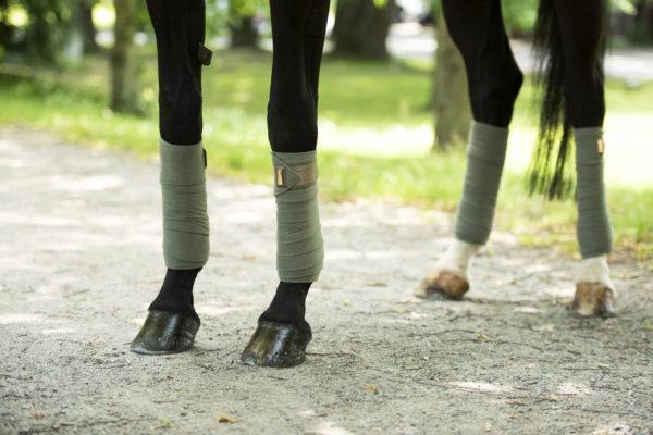 equestrian-stockholm-golden-olive-fasli