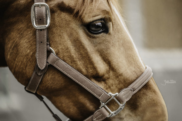 kentucky-horsewear-anatomic-suede-halter