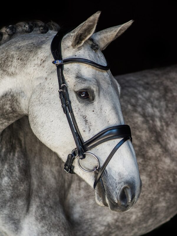ps-of-sweden-bridle-flying-change