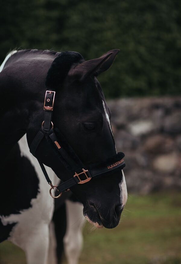 equestrian-stockholm-kotofek-vezetoszar-dark-sky
