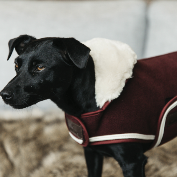 kentucky-dog-coat-heavy-fleece