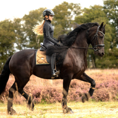 equestrian-stockholm-golden-brass-drezurna-podsedlova-decka