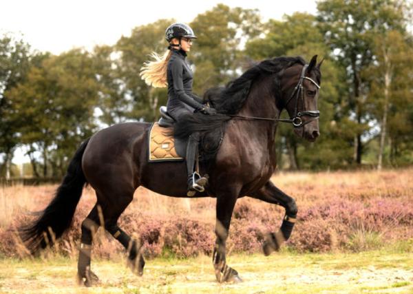 equestrian-stockholm-dressage-saddle-pad-golden-brass