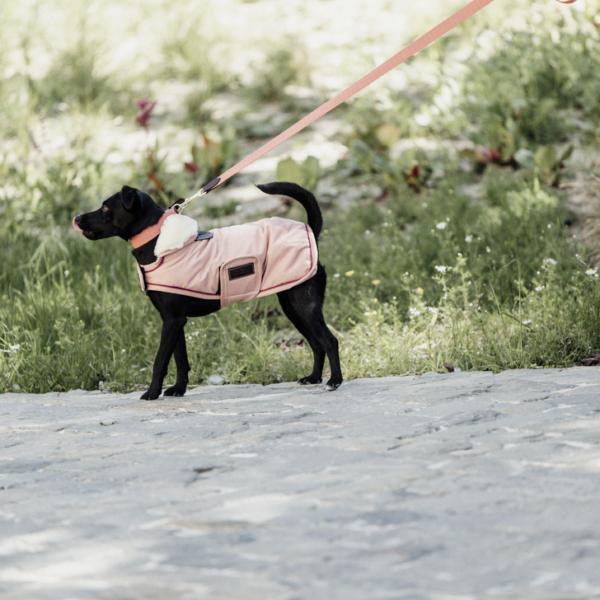 kentucky-dog-coat-waterproof-coral