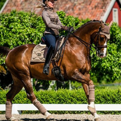 equestrian-stockholm-champagne-drezurna-podsedlova-decka