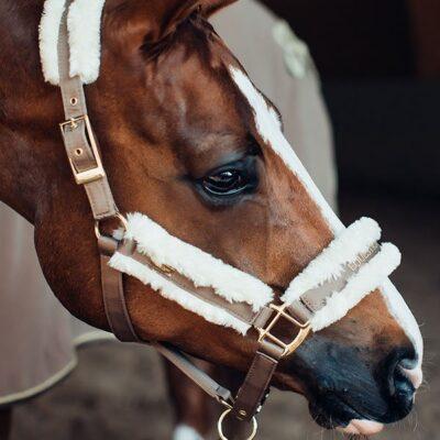equestrian-stockholm-fur-halter-lead-rope-champagne