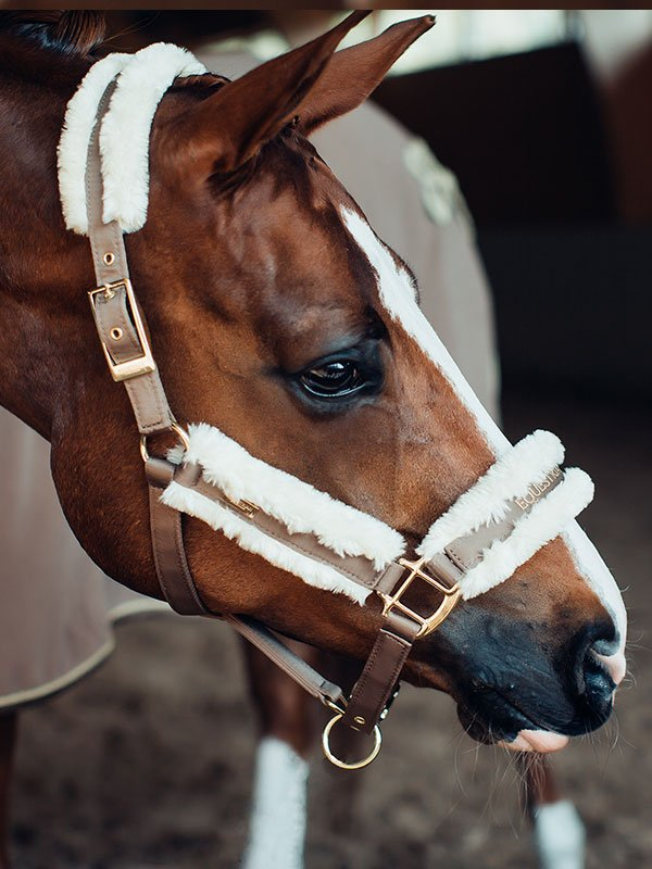 equestrian-stockholm-kotofek-vezetoszar-champagne