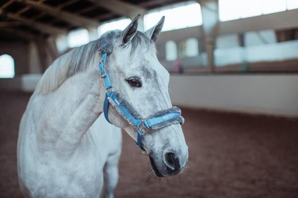 equestrian-stockholm-fur-halter-lead-rope-parisian-blue