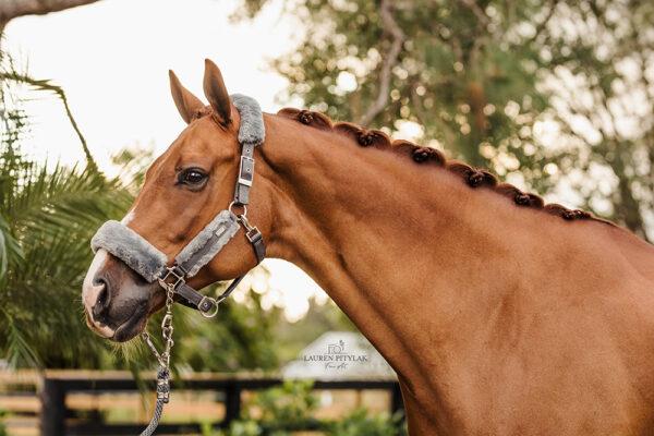 equestrian-stockholm-kotofek-vezetoszar-silver-cloud