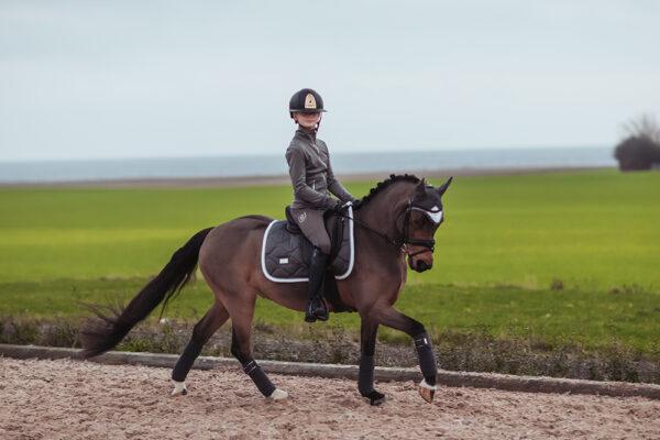equestrian-stockholm-silver-cloud-dijlovas-nyeregalatet-cob