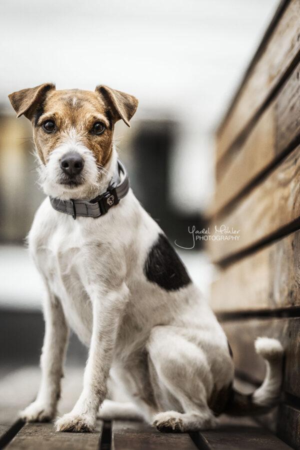 kentucky-dog-collar-reflective
