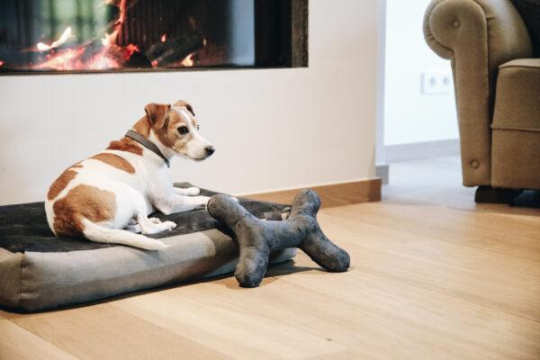 kentucky-dog-toy-bone