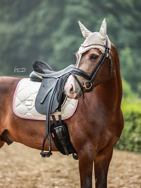 equestrian-stockholm-desert-rose-dijlovas-nyeregalatet-cob